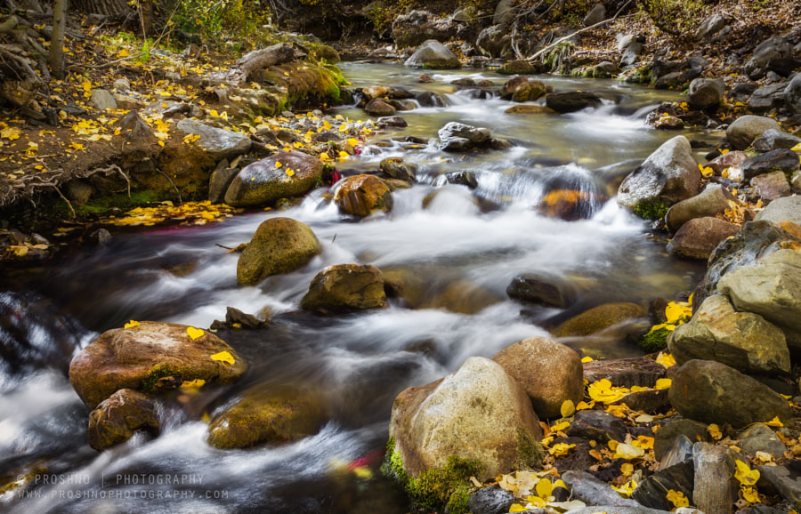 Fall in McGee Creek