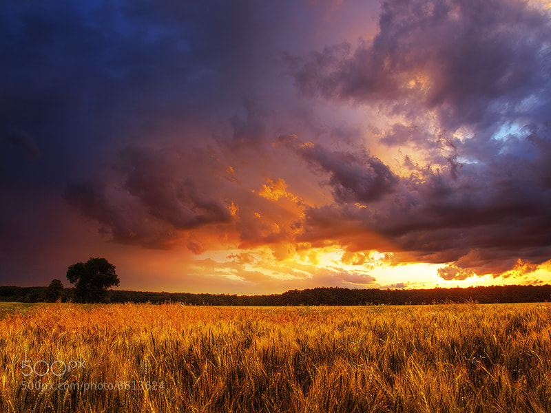 Photograph Summer wheatlands pt.XIV. by Zsolt Zsigmond on 500px