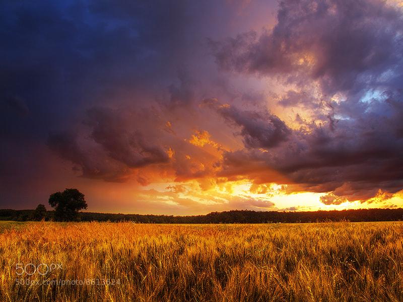 Photograph Summer wheatlands pt.XIV. by Zsolt Zsigmond on 500px
