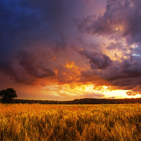 Summer wheatlands pt.XIV. by Zsolt Zsigmond (realityDream)) on 500px.com