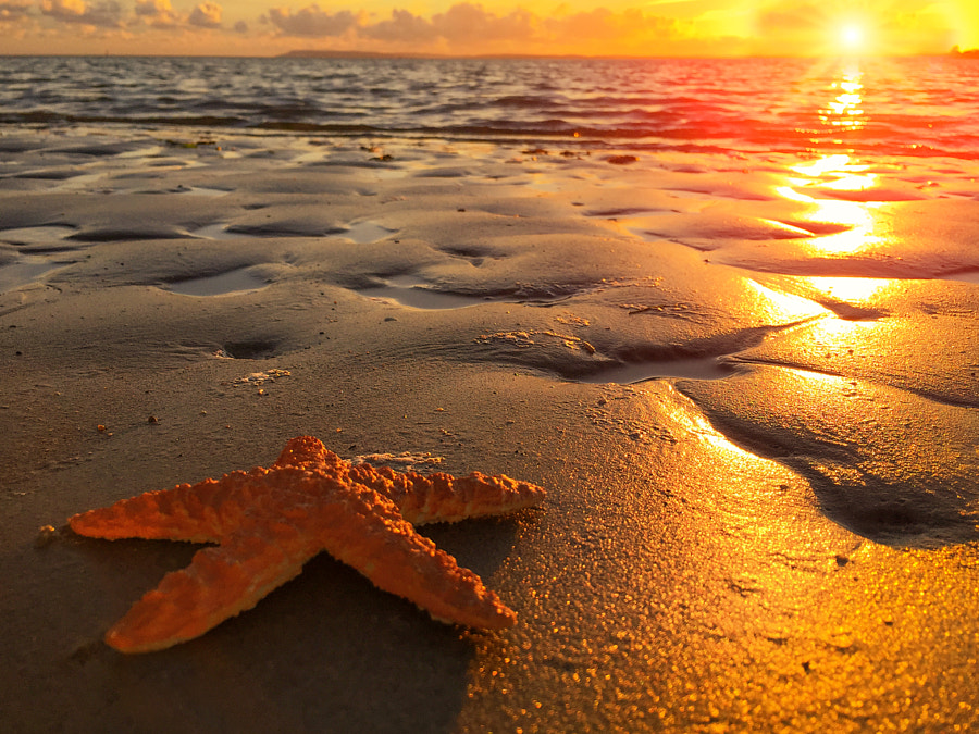 Photograph Starfish Sunset by Tony Antoniou on 500px