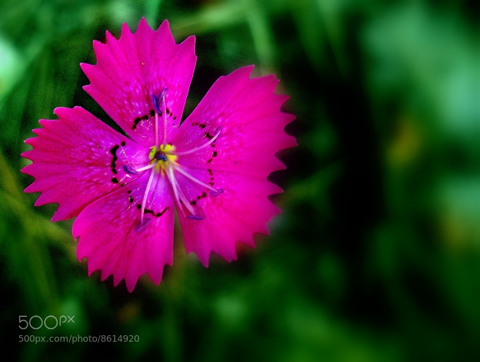 Photograph pink dreams by Salih Demir on 500px