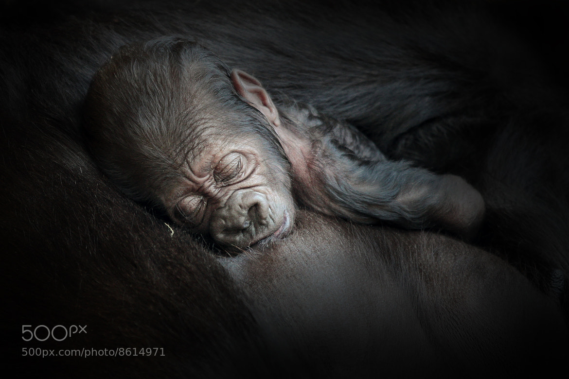 Photograph JUST BORN by Antje Wenner on 500px