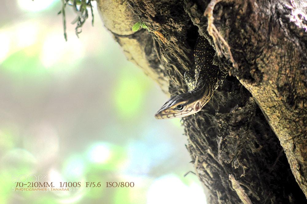 Photograph Lizard Babe. by Tanarak Tan on 500px