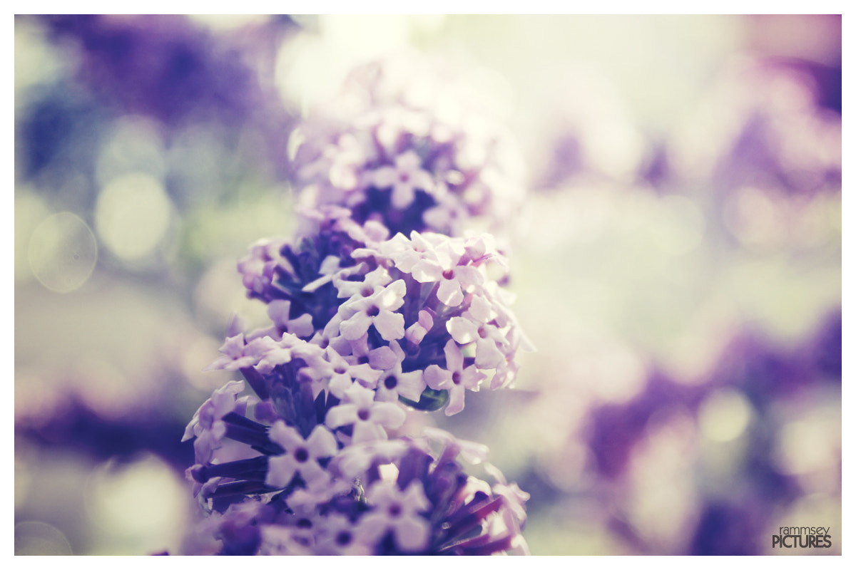Photograph *violet* by rammsey  on 500px
