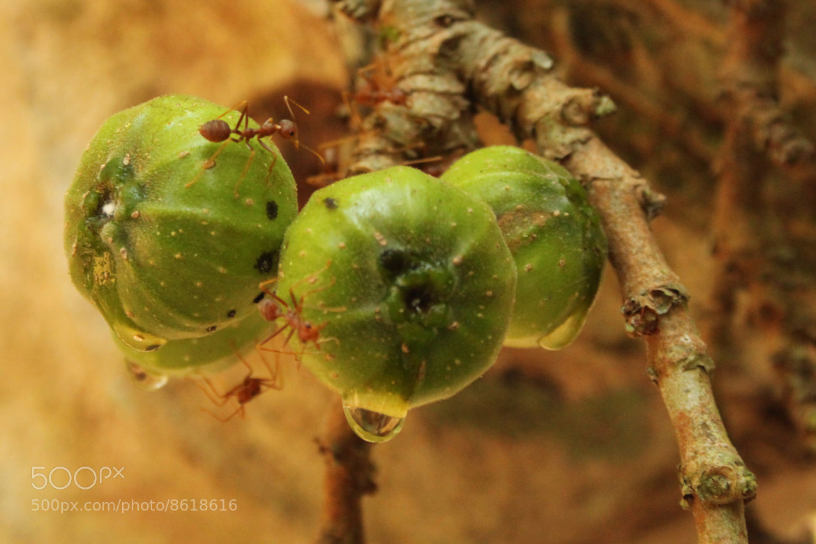 Photograph ants by Morgan Johnston on 500px