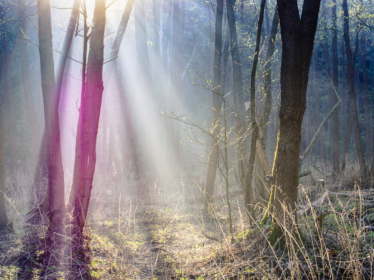 Photograph Morning in forest by Art V. on 500px