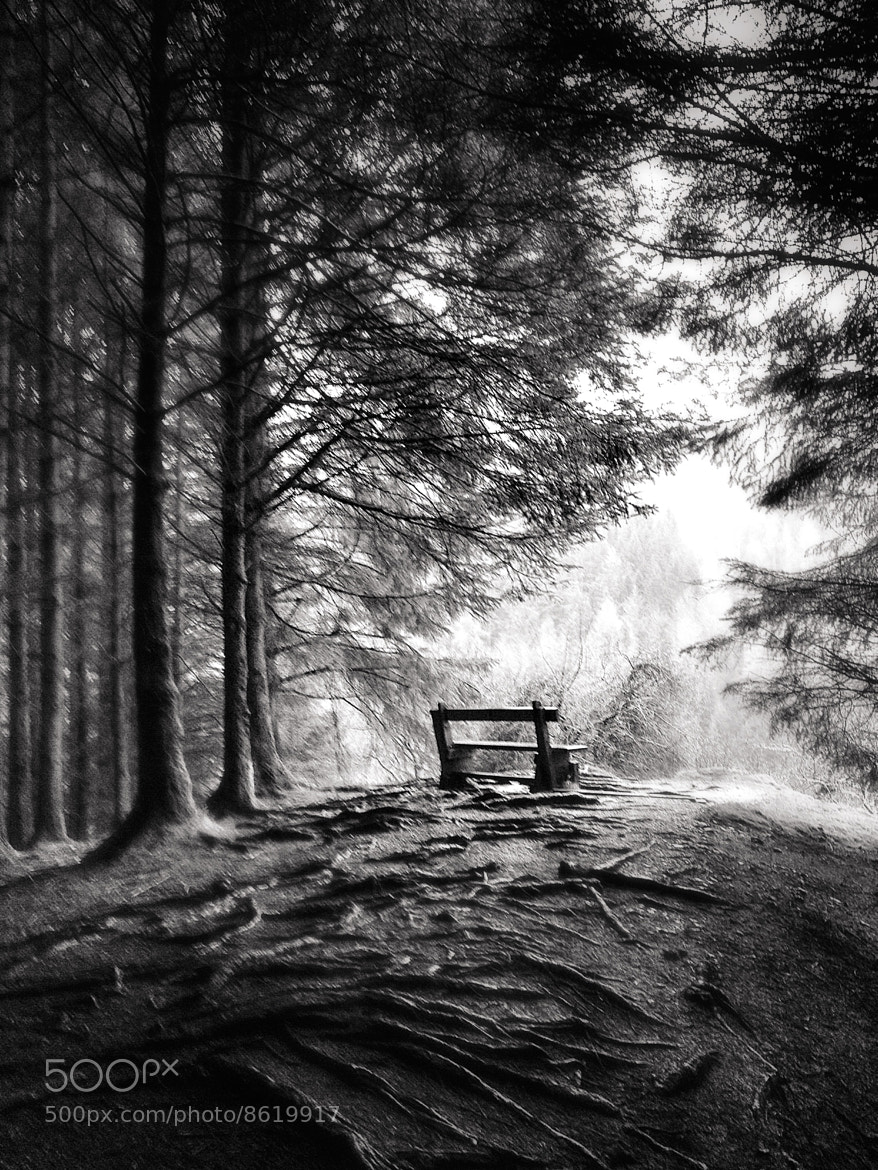 Photograph Out of the Woods by Sarah Hughes on 500px