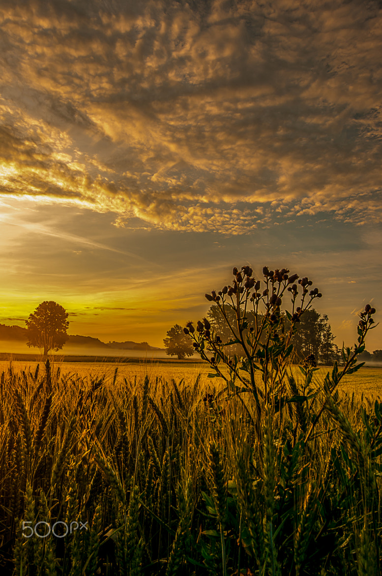 Photograph Distel im Weizenfeld by Leo Pöcksteiner on 500px