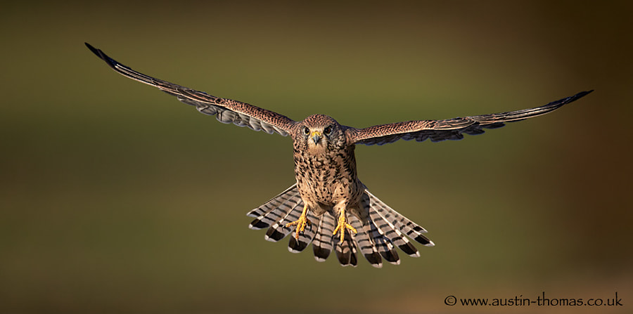 Incoming Kestrel...