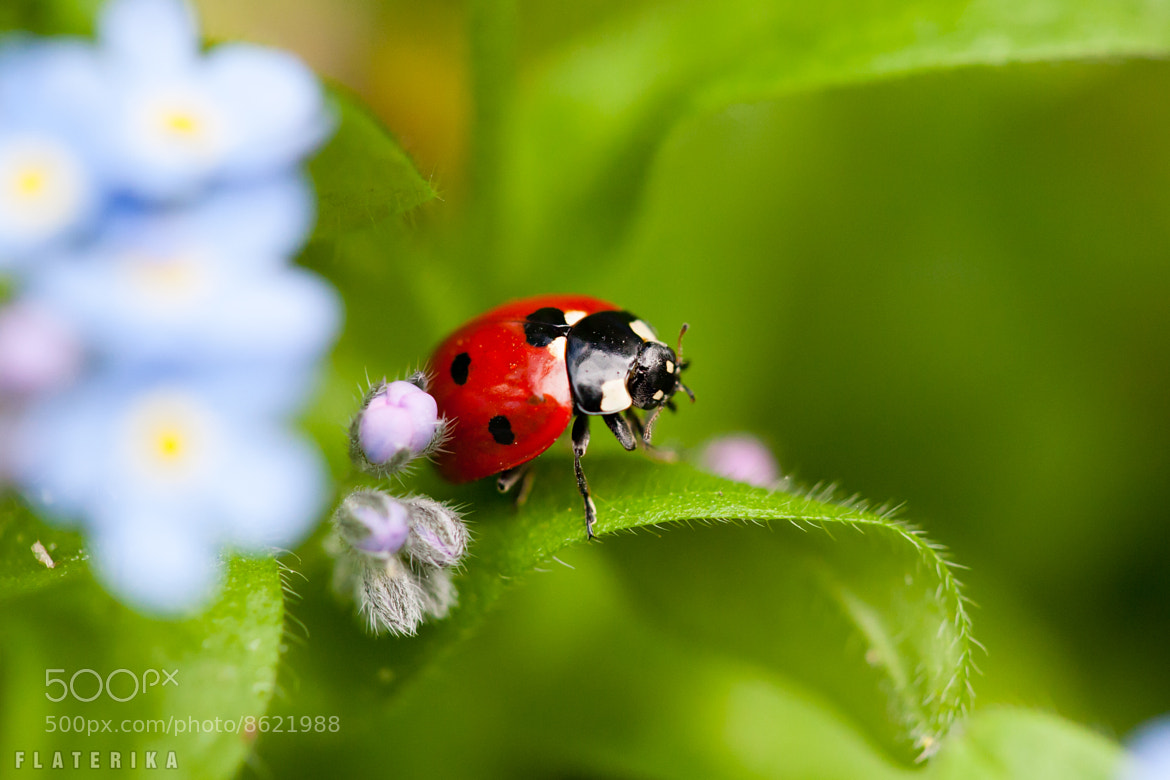 Photograph Ladybird by Carole Merten on 500px