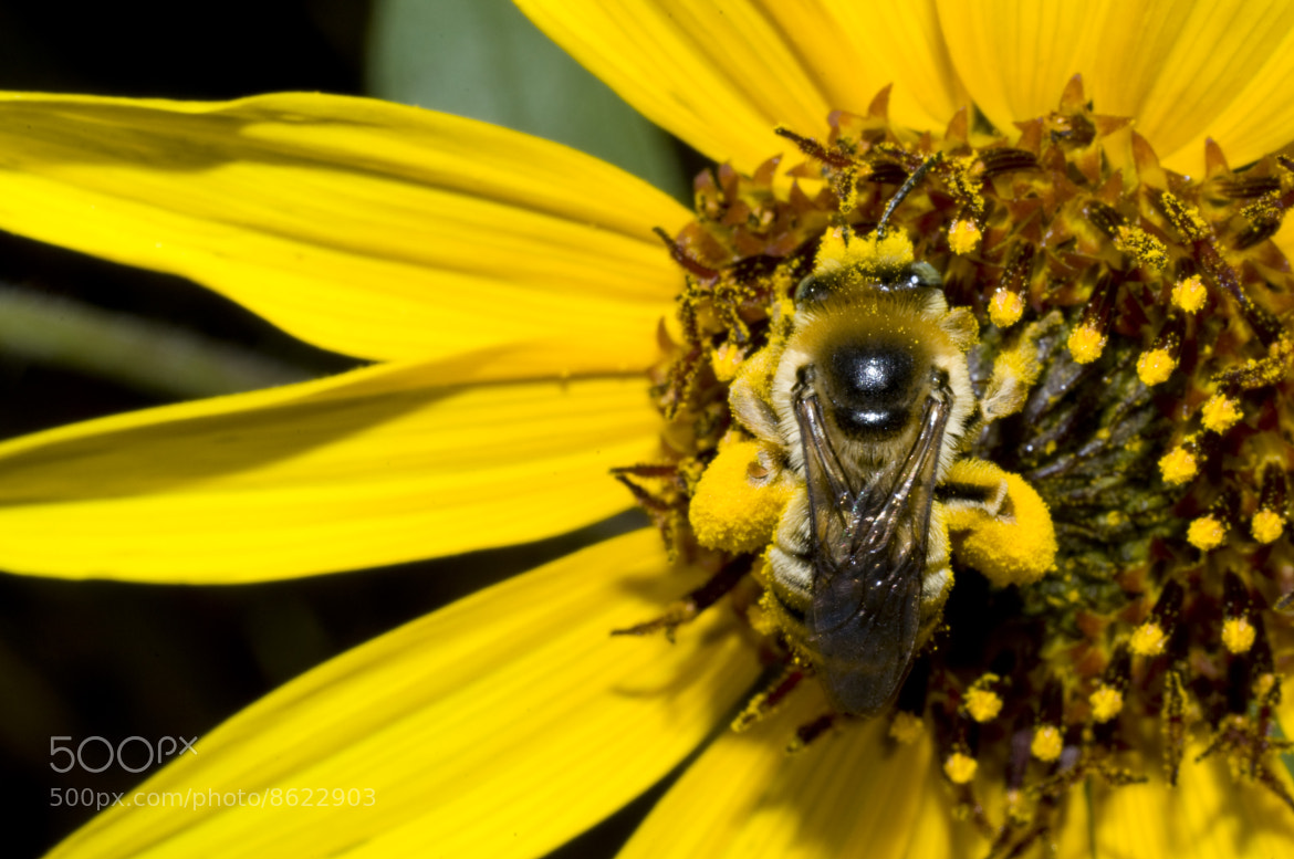 Photograph Pollen Time by Peter Alexander on 500px
