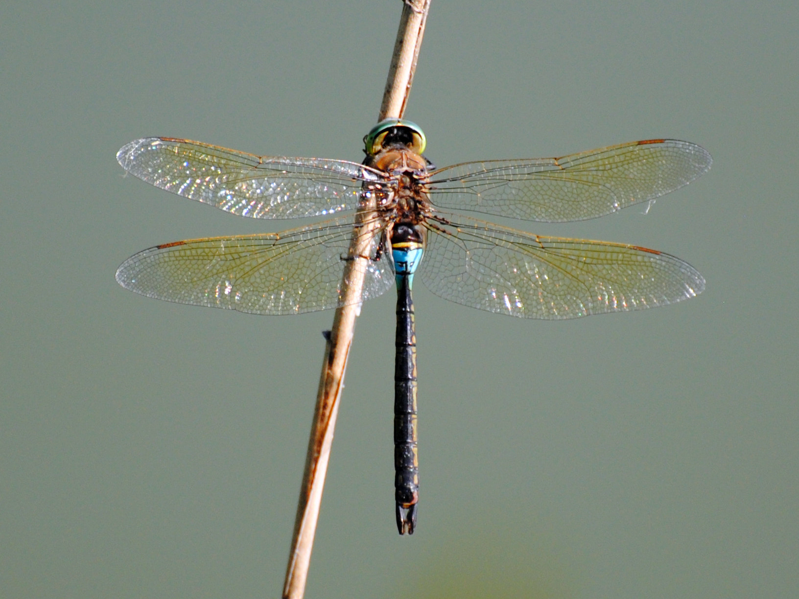Photograph Dragonfly_2 by Umberto Forlini on 500px