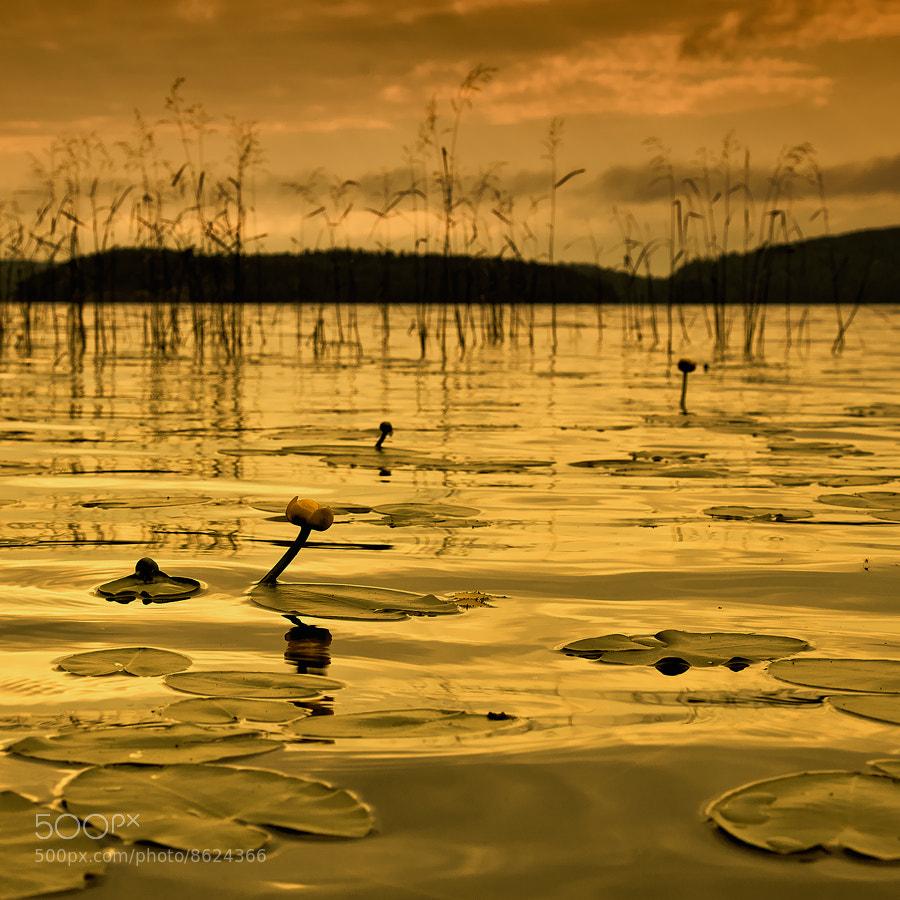 Photograph gold etude by Oleg  Dmitriev on 500px