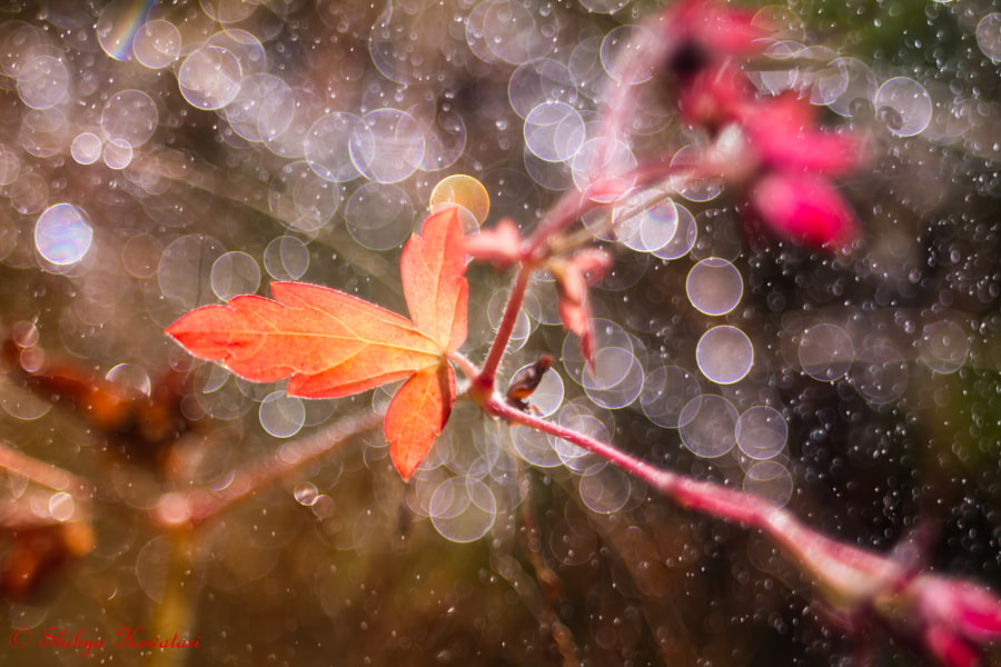 Photograph Pretty melody of Autumn by Shihya Kowatari on 500px