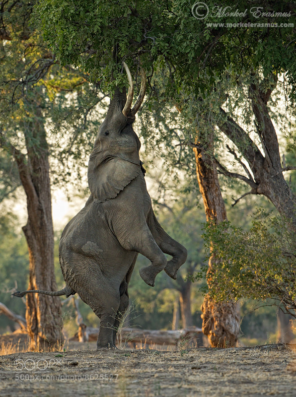 Photograph A Fine Balance by Morkel Erasmus on 500px