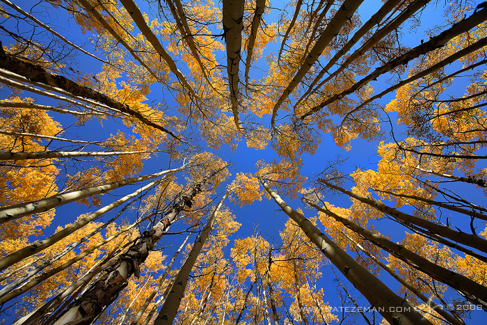 Photograph Looking Up by Nate Zeman | natezeman.com on 500px