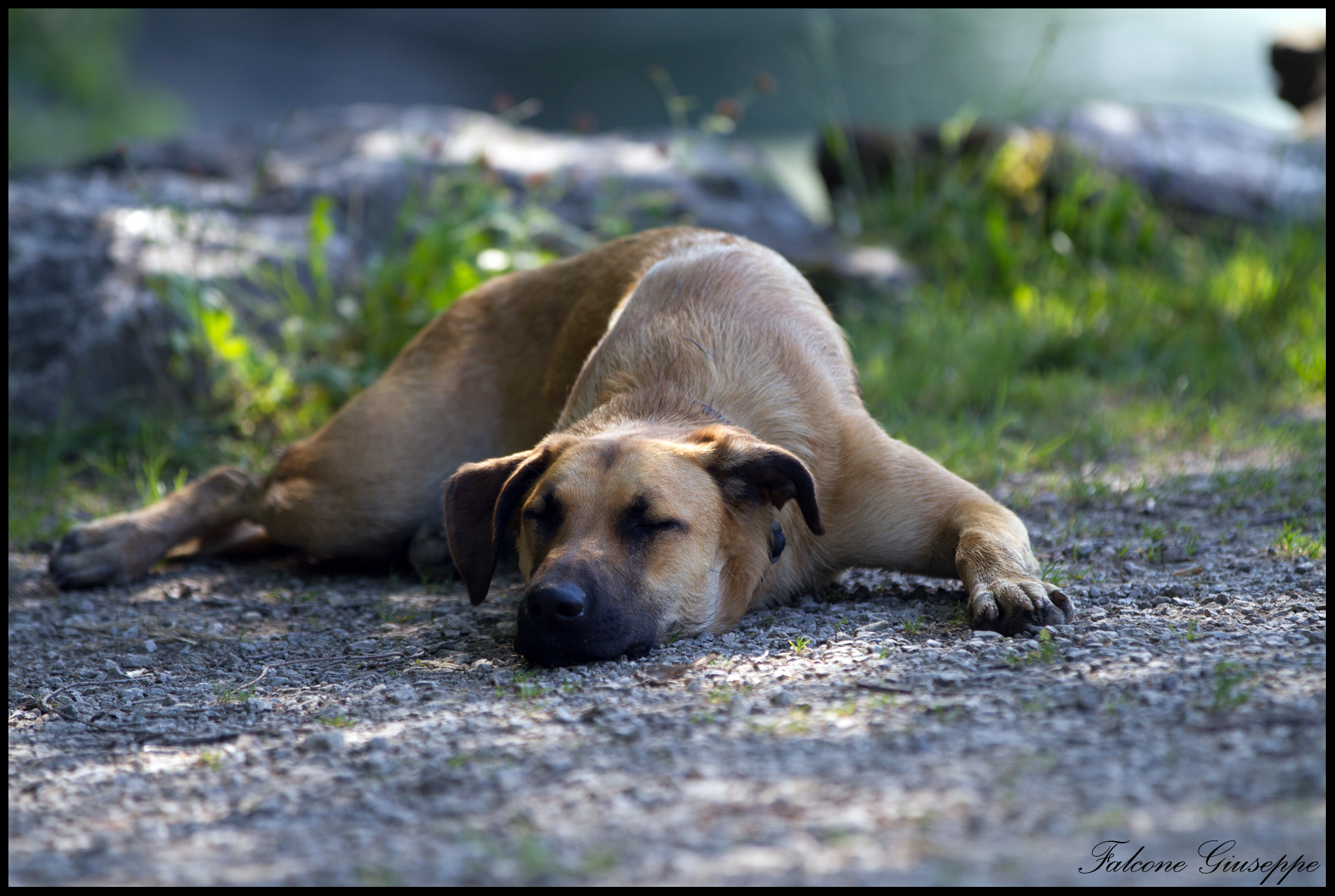 Photograph Sleeping dog by Falcone Giuseppe on 500px