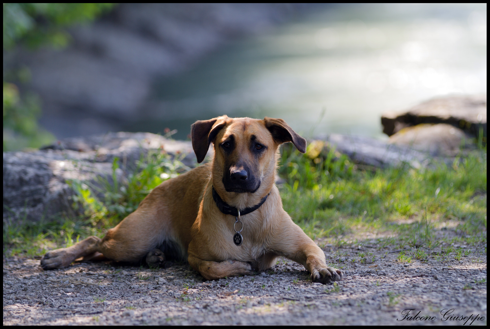Photograph Dog by Falcone Giuseppe on 500px