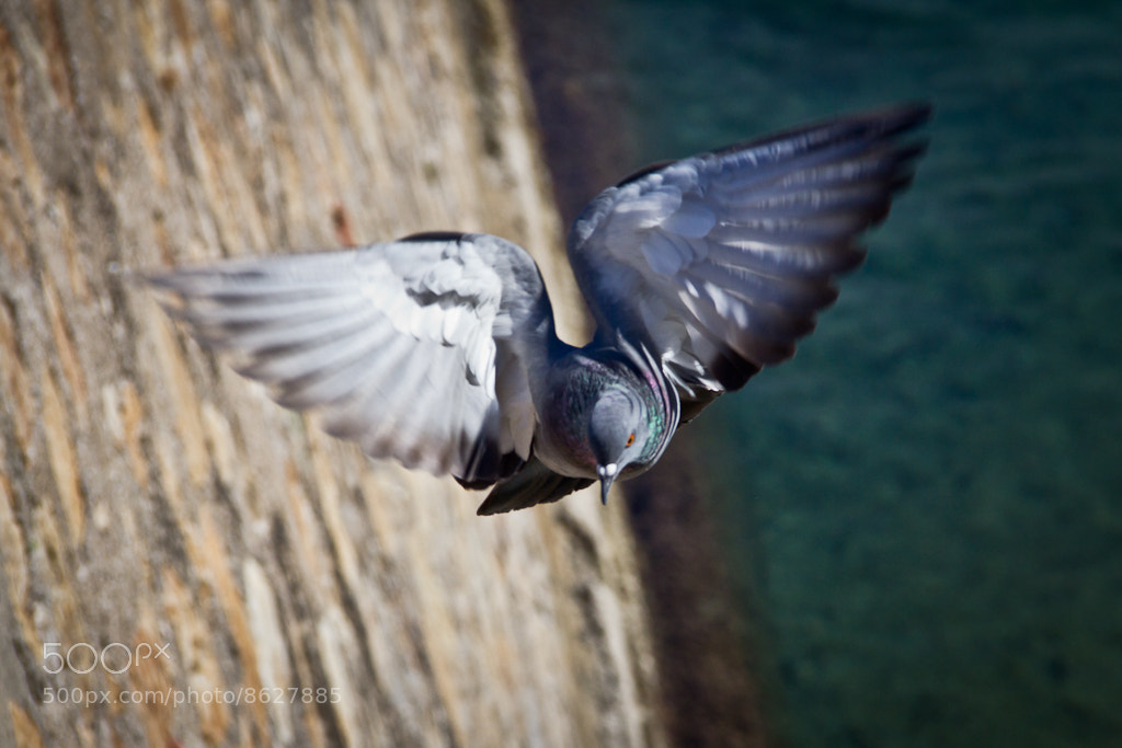 Photograph Flying on the fringe by Carlos Larios on 500px