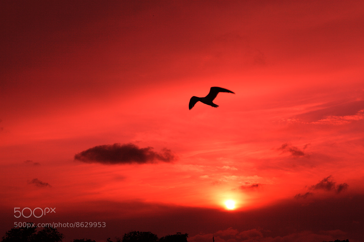 Photograph seagull by Delia gutierrez on 500px