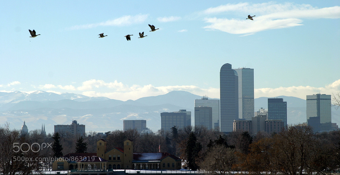 Photograph Downtown Denver by Nick Hebert on 500px