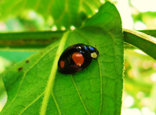 Photograph Unusual ladybird by Laura Scott on 500px