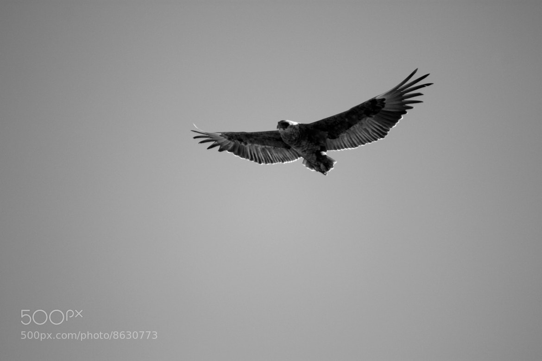 Photograph Bird by Jan Kosela on 500px