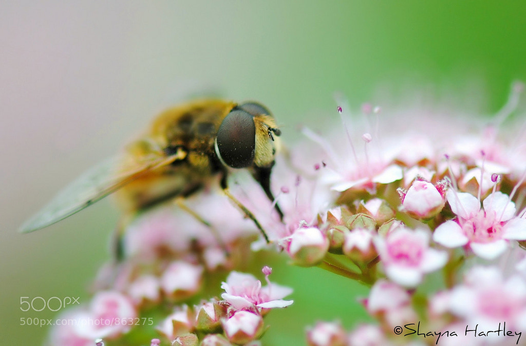 Photograph Fly Macro by Shayna Hartley on 500px