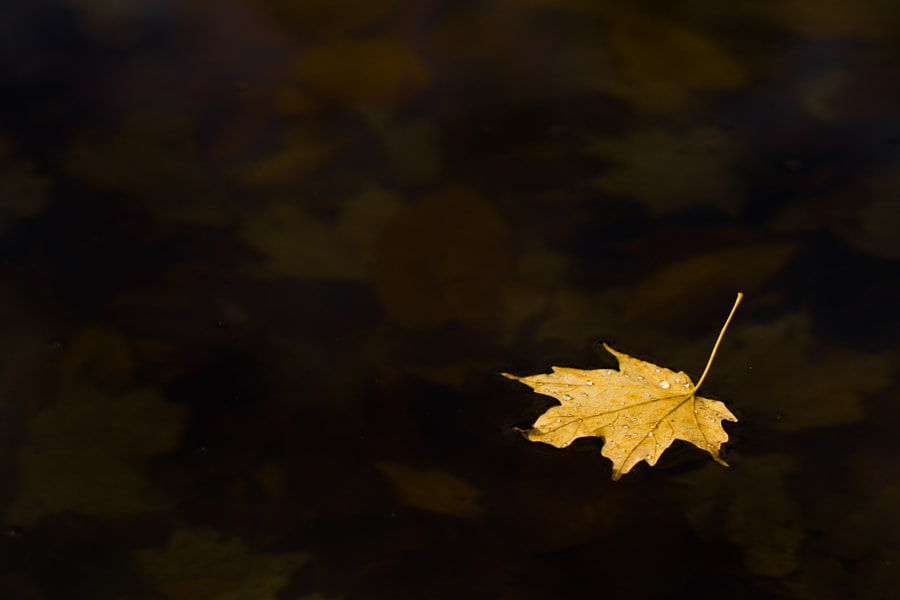 Leaf on Water in Color