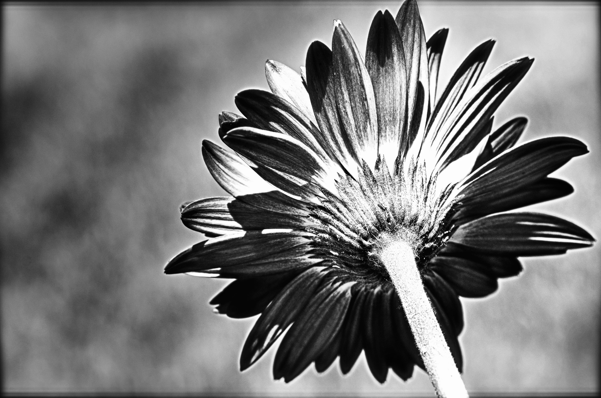 Photograph daisy by Ron Feathers on 500px