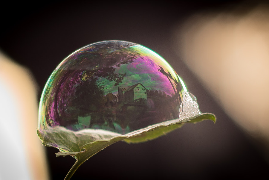 Photograph Life cradled in a bubble by Michael Higgins on 500px