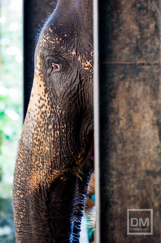 Photograph Elephants by Davo Muttiah on 500px