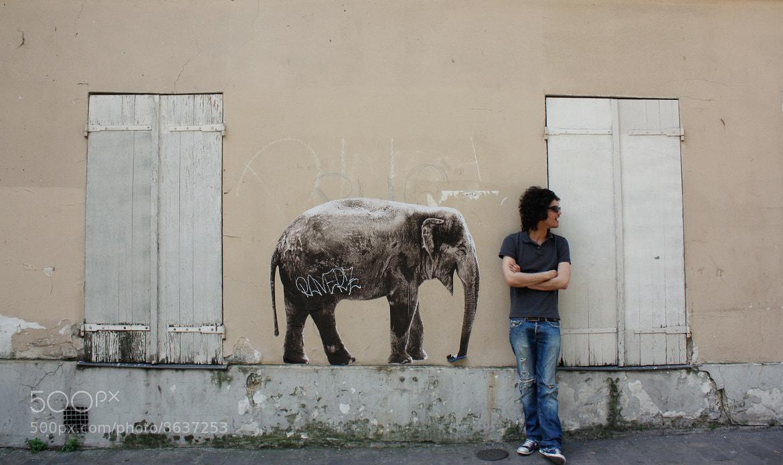 Photograph Elephant by María Moyano on 500px