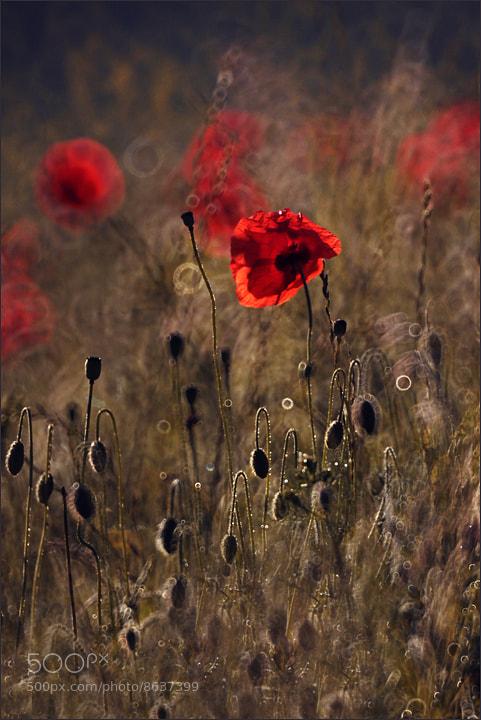 Photograph *** by Dorota Miklaszewska on 500px