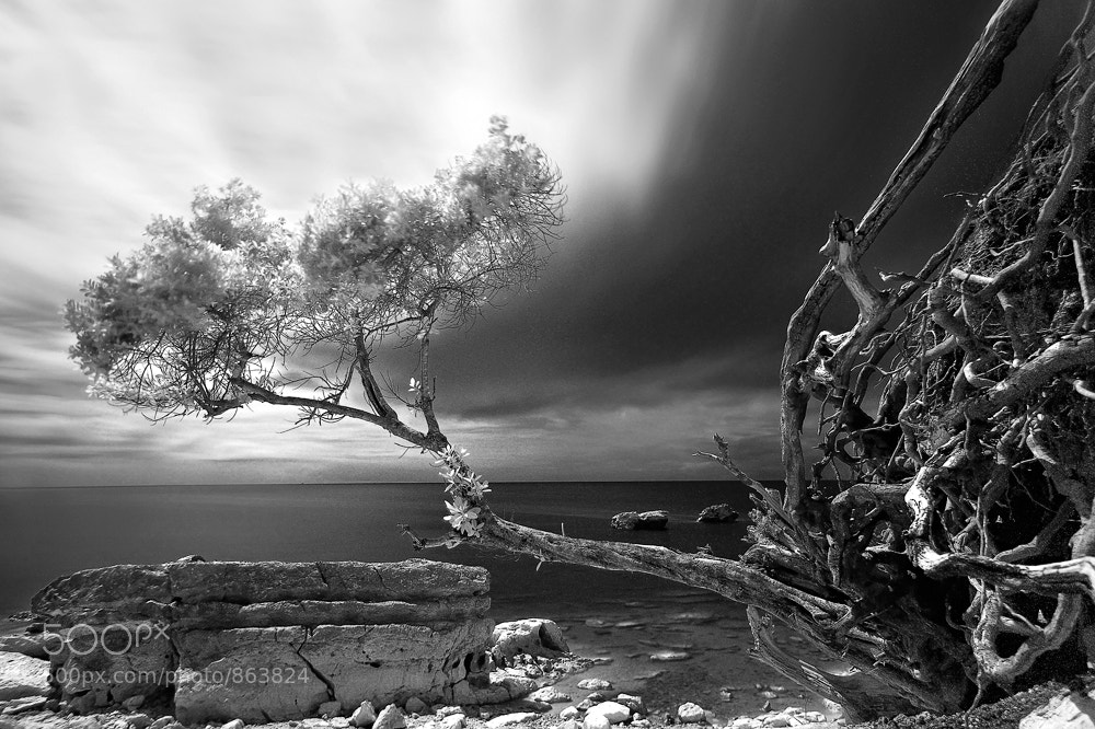 Photograph ALONE IN THE WINDS by Edwin Martinez on 500px