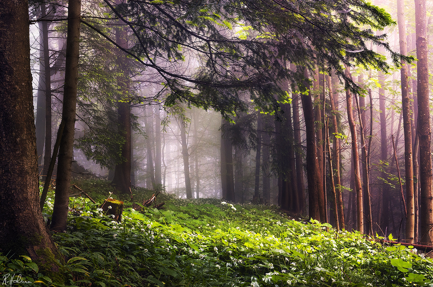 Photograph Light in the Forest by Robin Halioua on 500px