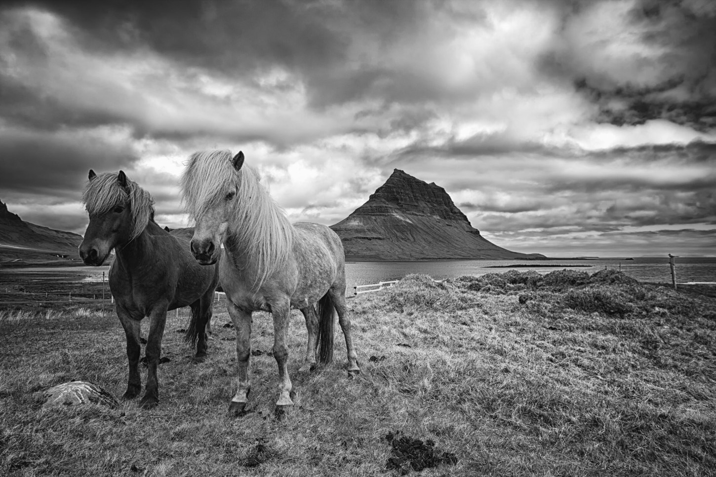Photograph I love Icelandic horses by Tim Vollmer on 500px
