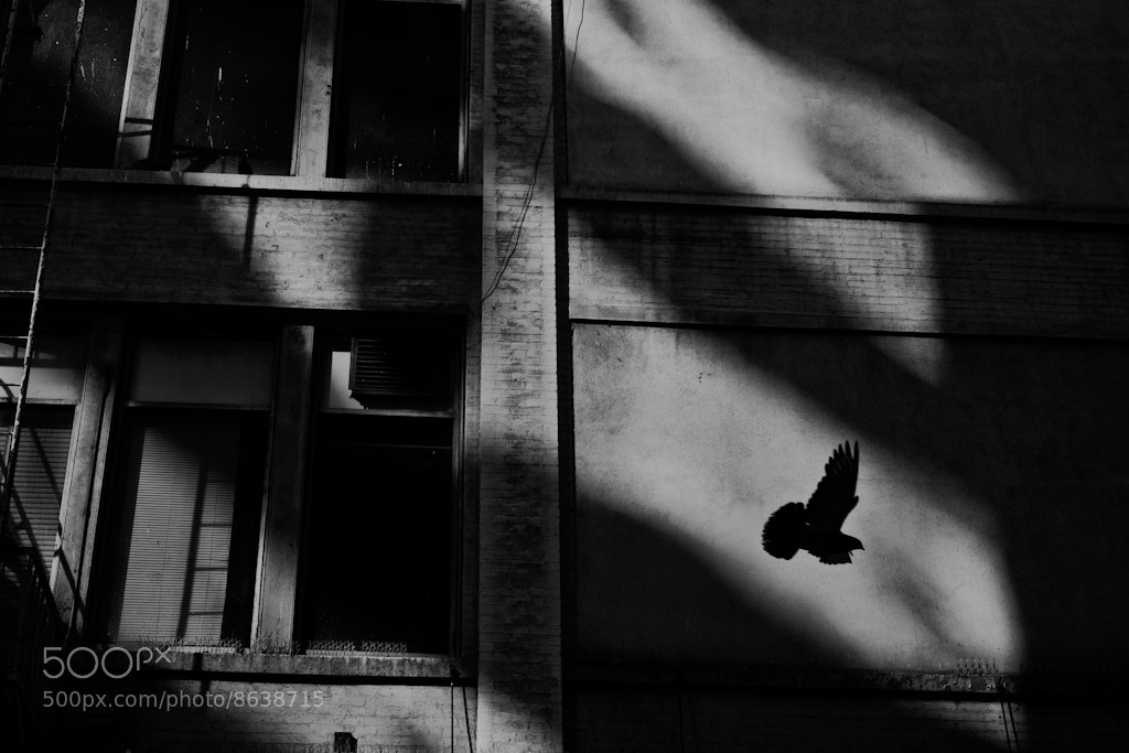 Photograph F-Light by Rinzi Ruiz on 500px