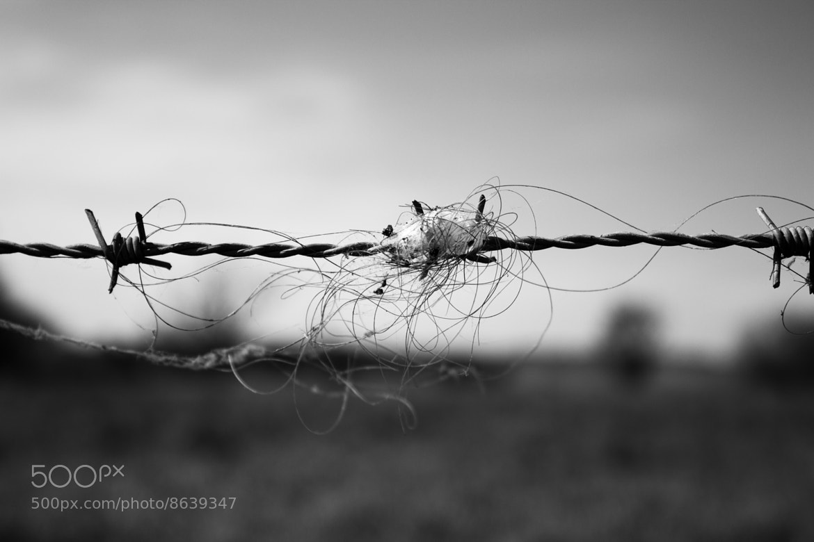 Photograph On the Wire by Gareth Langford on 500px