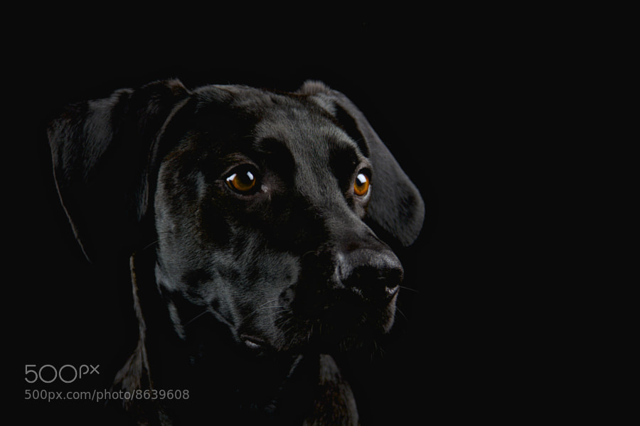 Photograph me:dog by Michael Huebscher on 500px