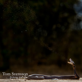Spitting by Tom Svensson (tomsvensson)) on 500px.com