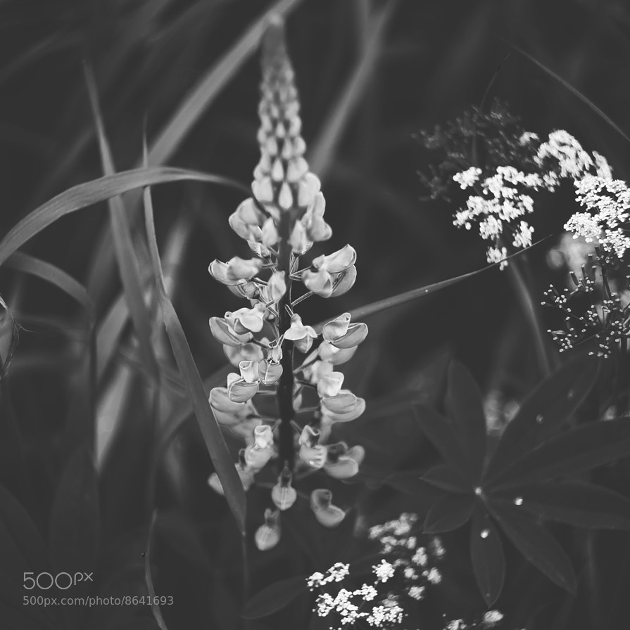 Photograph Flowers by Дмитрий Фёдоров on 500px
