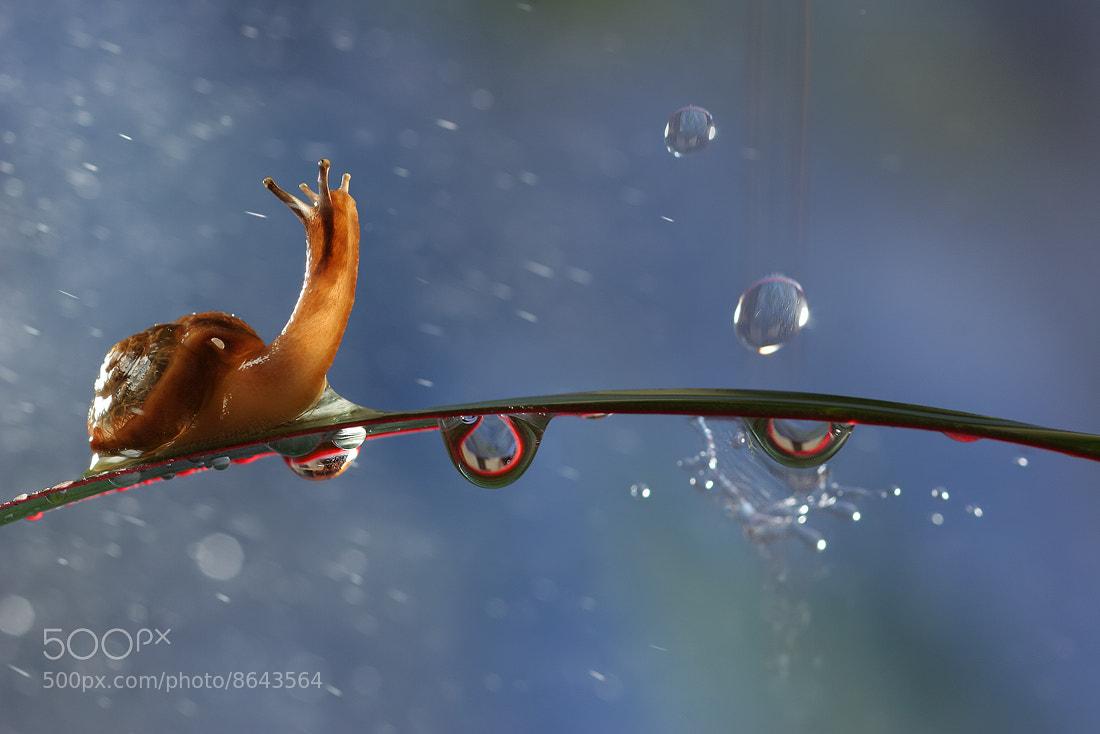 Photograph Raindrops by Vadim Trunov on 500px