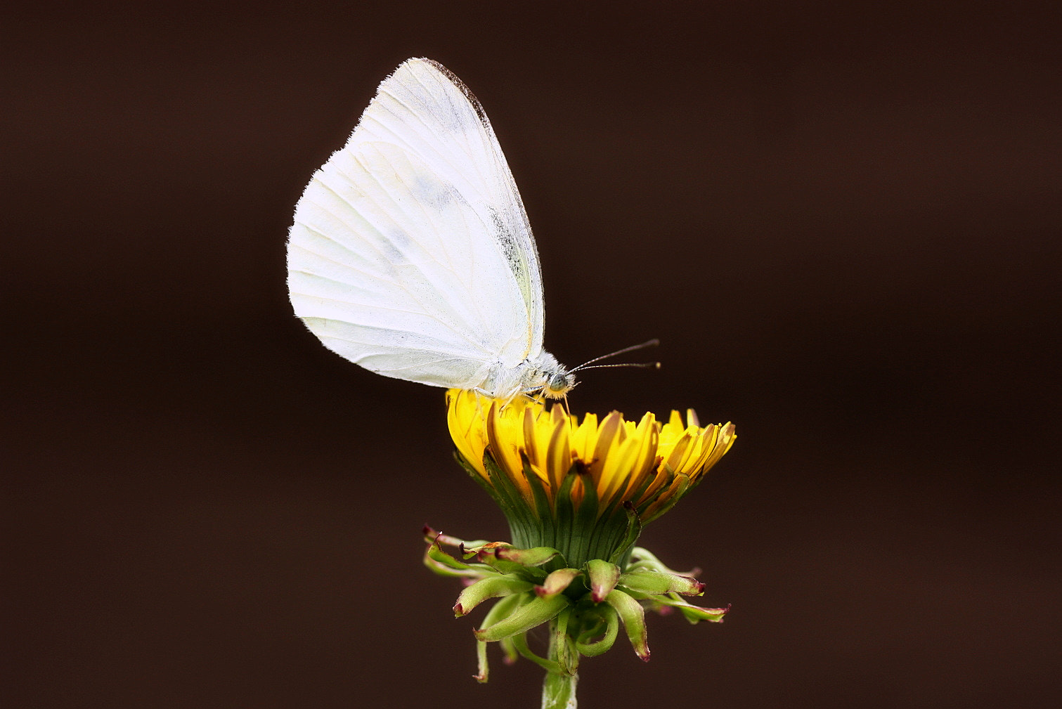 Photograph Small White by くみちゃん  on 500px