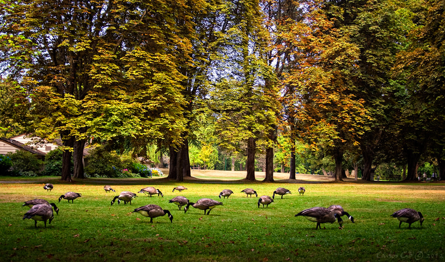 Photograph picnic at Stanley Park by Carlos CB on 500px