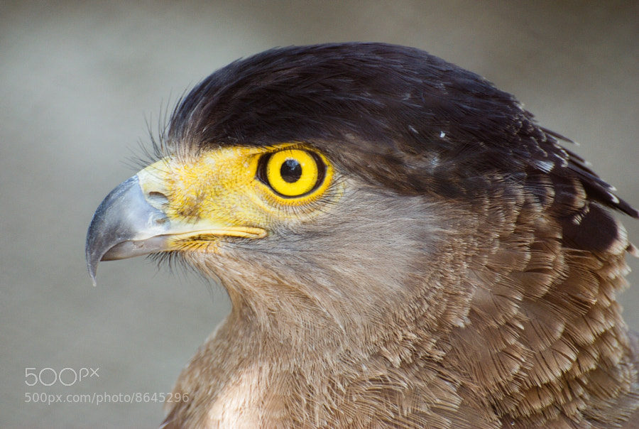 Photograph Eye of the Eagle by S Amit on 500px