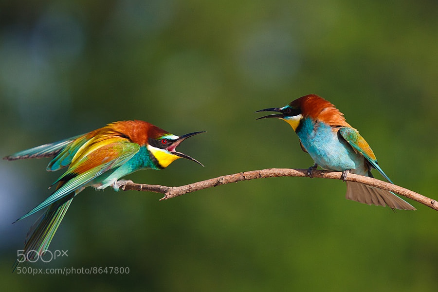 Photograph Disagreement by Tibor Jantyik on 500px