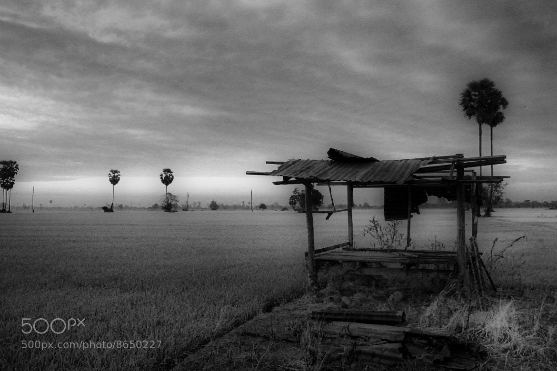 Photograph Field. by Kitsadakron Pongha on 500px