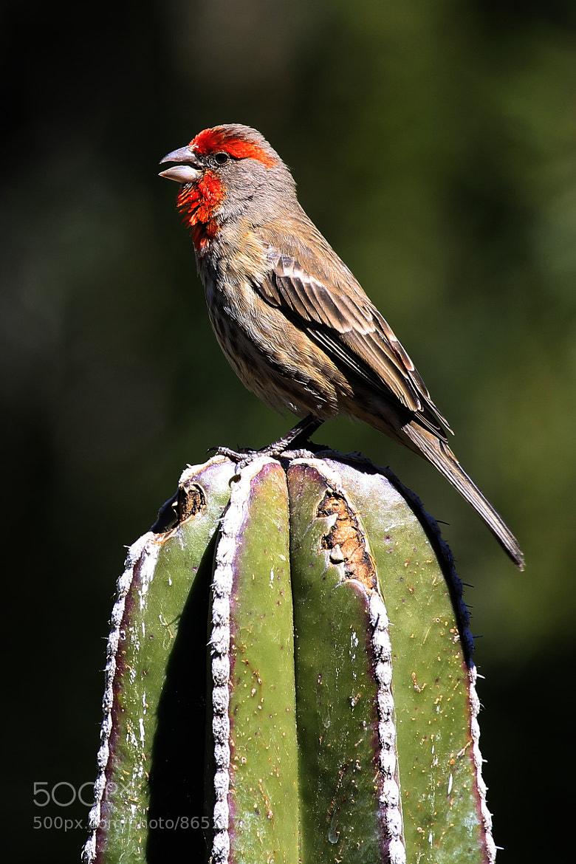 Photograph Little bird on cactus by Cristobal Garciaferro Rubio on 500px